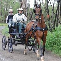 Bannister Arabian Saddlebred Horse Stud, Bannister NSW