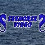 Seehorse Video Arabian & Saddlebred Horse Videos and Training Videos