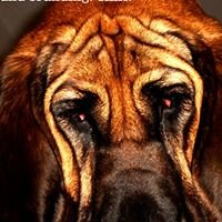 Bloodhound Branding.  Sniff.