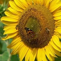 Walkerville Bee Keepers.