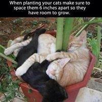 Horizon Pet Care