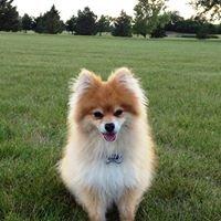 Cherished Pet Cremation