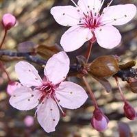 Fleurs de Bach- Réflexologie plantaire-Derumier Johanne