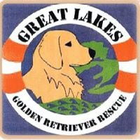 Great Lakes Golden Retriever Rescue
