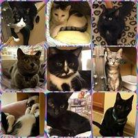 The Cat's Meow Rescue NJ
