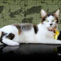Acacia Pet Clinic