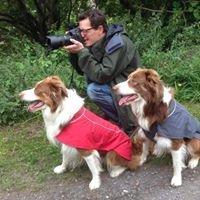 Hairy Dog Photography