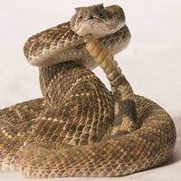 Partners Snake Avoidance