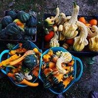 Bountiful Baskets Farm