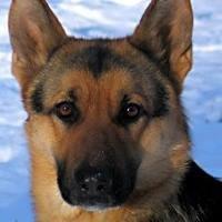 Vom Wunderhund German Shepherd Dogs