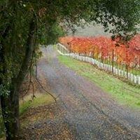 Arbor Bench Vineyard