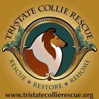 Tri State Collie Rescue