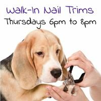Pet Valu Barrie Wellington St