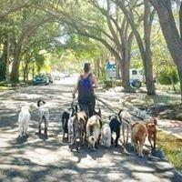 Doggie Date Tampa