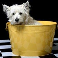 The Sandy Paw Pet Spa