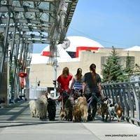 Paws Dog Daycare