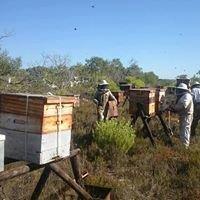 JW's Beekeeping Honey & Equipment