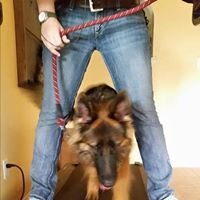 Behave - Dog Training & Behavior Modification