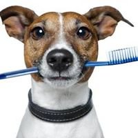 Dorr Veterinary Clinic