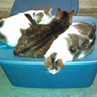 NY Feral Cats
