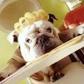 Orlando Dog Grooming