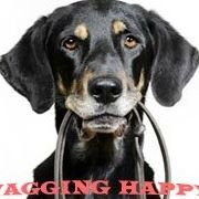 Wagging Happy Pet Care & Dog Walking Service