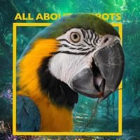 All About Parrots - Interactive Book