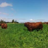Island Pastures Beef