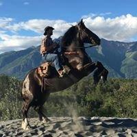 Alaska Horse Adventures LLC