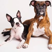 Bradenton Veterinary Emergency