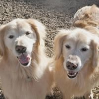 Topdog Daycare