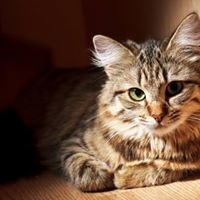 Pet Supplies Plus - Bay City, MI