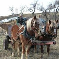 Next Step Horse Rescue Colorado
