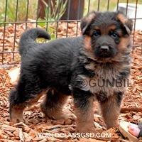 Gunbil German Shepherd Dogs