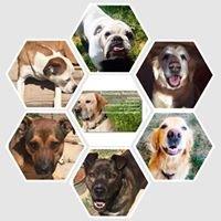 Pawsitively Petsitting, LLC