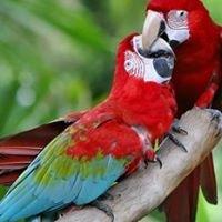 West Valley Bird Society