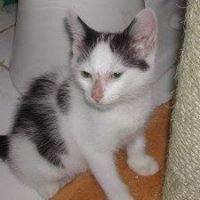 New Beginnings Cat and Kitten Adoptions, Inc.