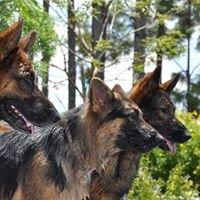 DreamCatcher German Shepherd Rescue