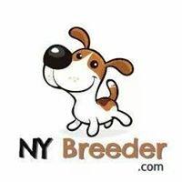 NY Breeder