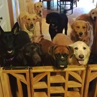 Come Over Rover Doggy Daycare