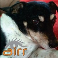 Animal Intervention, Rescue and Rights