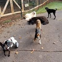 Pet Tender Angels Rescue and Rehabilitation