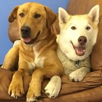 Dogstar Doggie Playcare