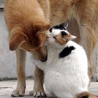 Adoro Animais