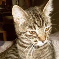 Pounce Cat Rescue &  Sanctuary