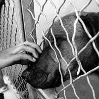 Ardmore Animal Care (Animal Shelter)