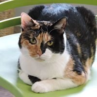 Kitty City Cat Rescue