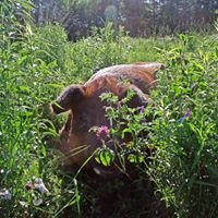 Elderflower Organic Farm