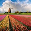 Heavenly Holland thumb
