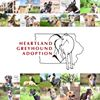 Heartland Greyhound Adoption